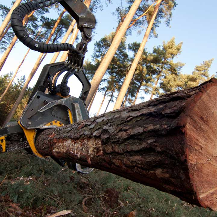 Forestry Operations by Tom Marshall