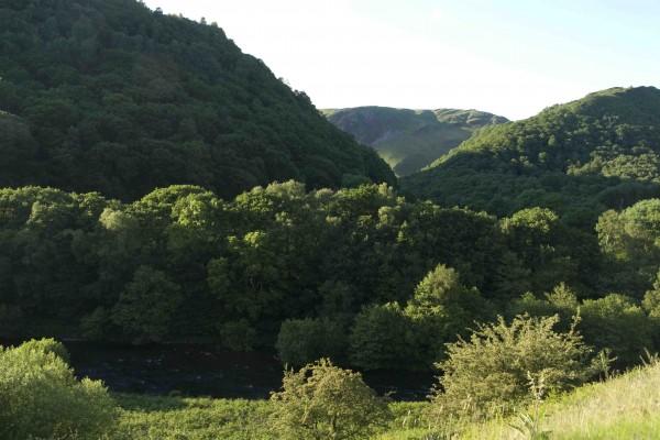 Edge of Twyi Forest