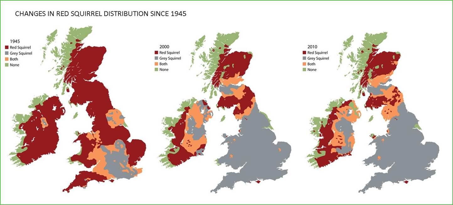 Changes in red squirrel distribution since 1945